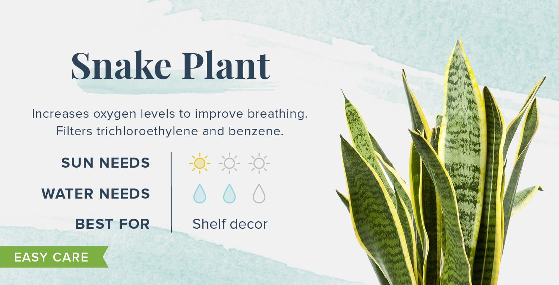 snake plant plants that help you sleep
