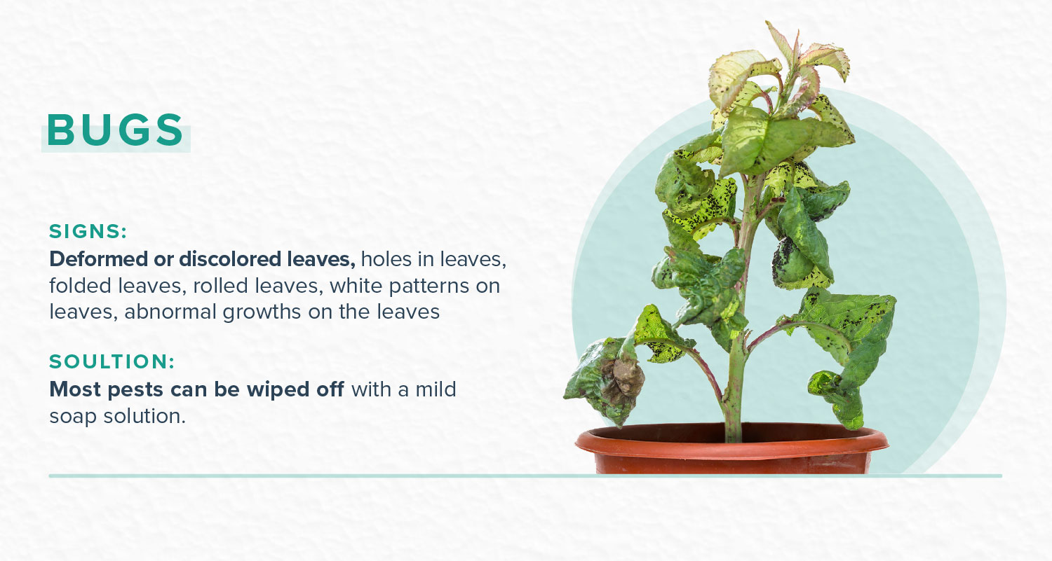 how to revive a plant with bug and pest problems