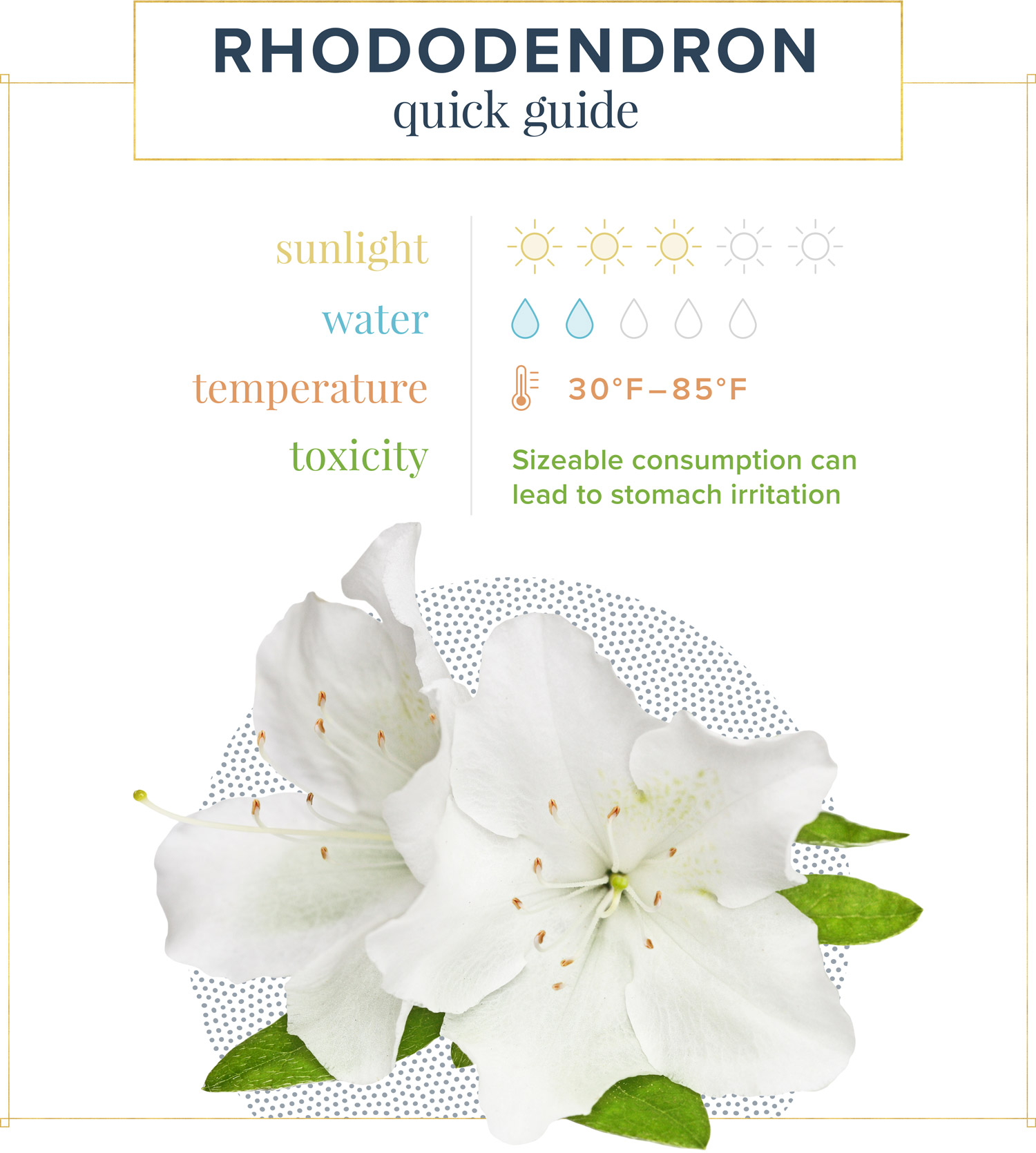 Rhododendron care quick guide. Sunlight: 3 suns out of 5 Water: 2 water drops out of 5 Temperature: 30ºF-85ºF Toxicity: Sizeable consumption can lead to stomach irritation