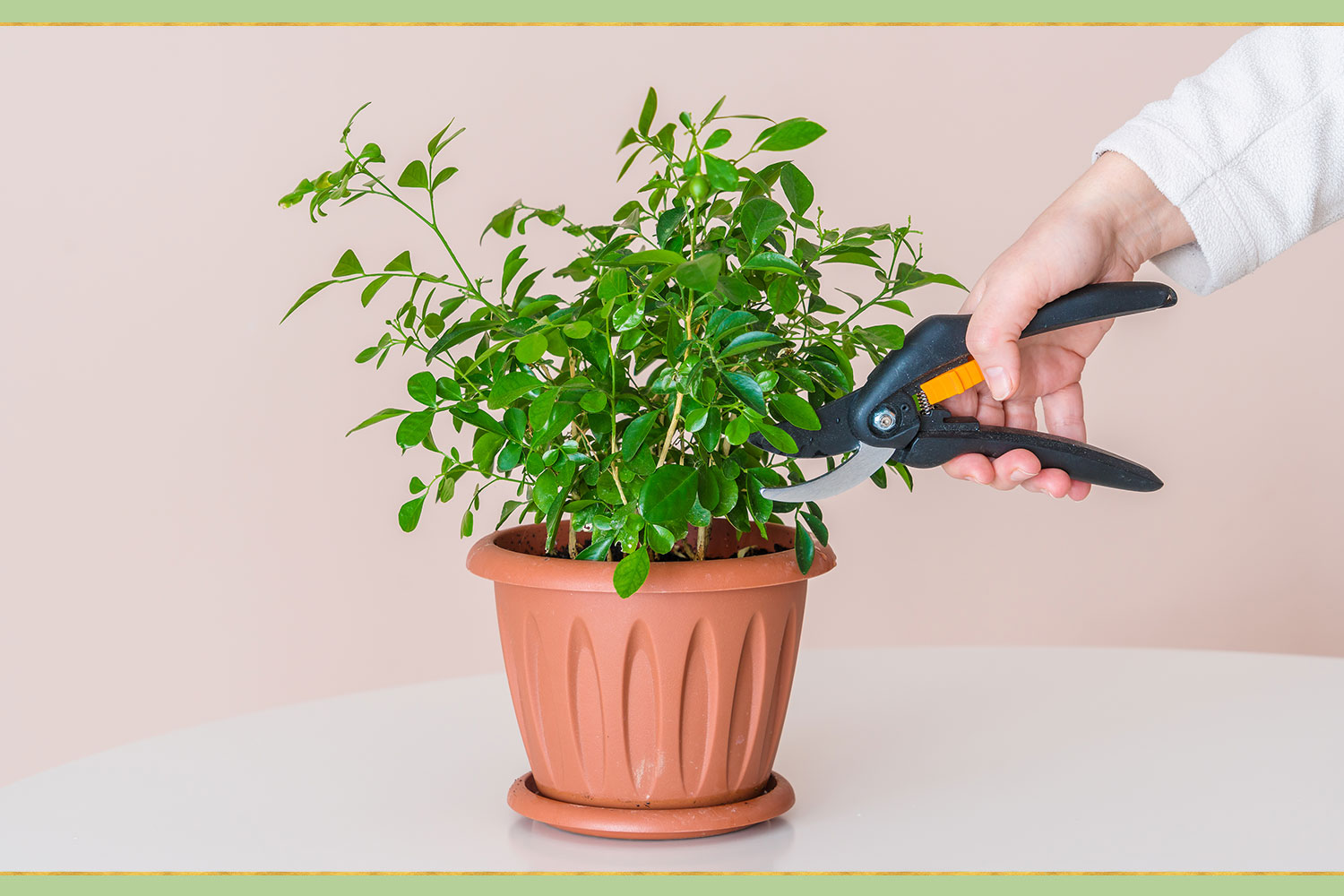 pruning green plant in pot