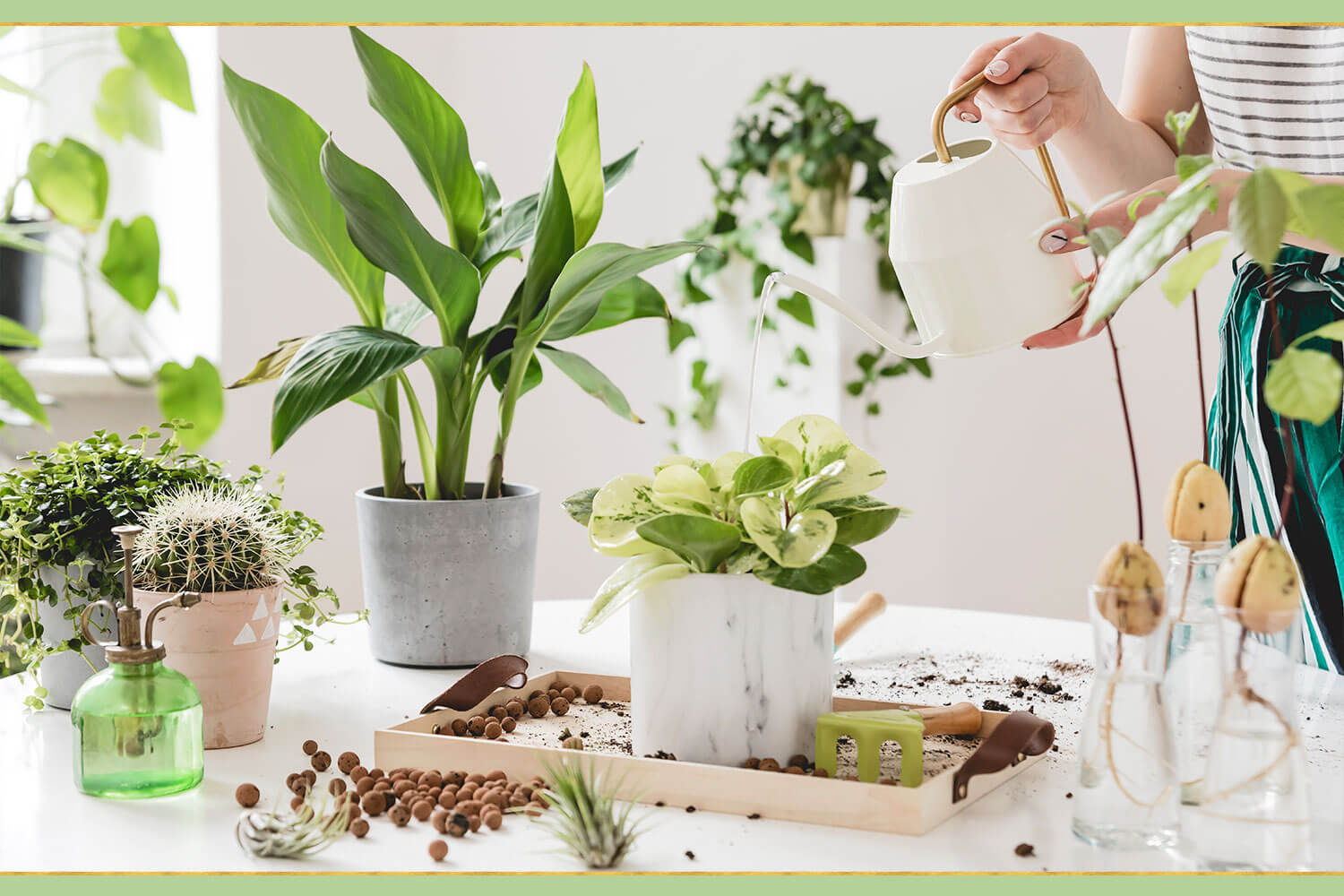watering green plants with white watering can
