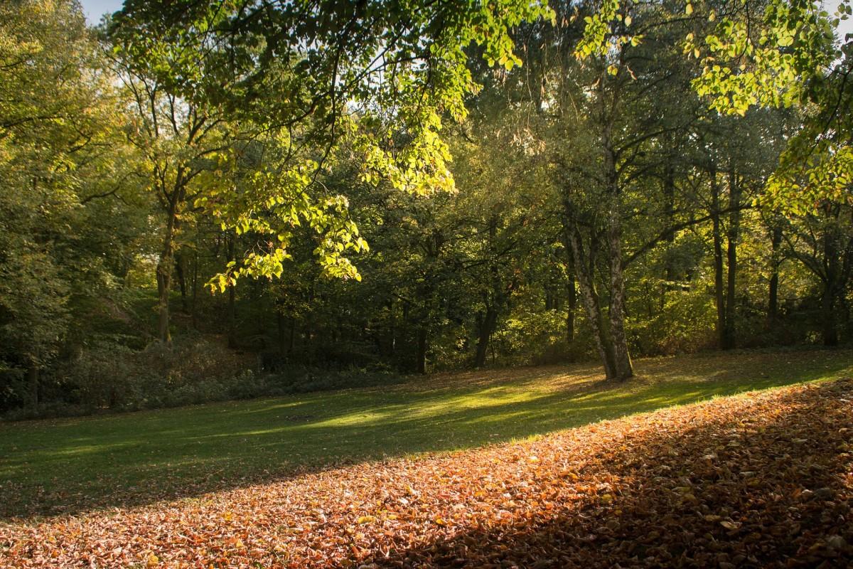 Hamburg Blick im Park, Quelle:pixabay