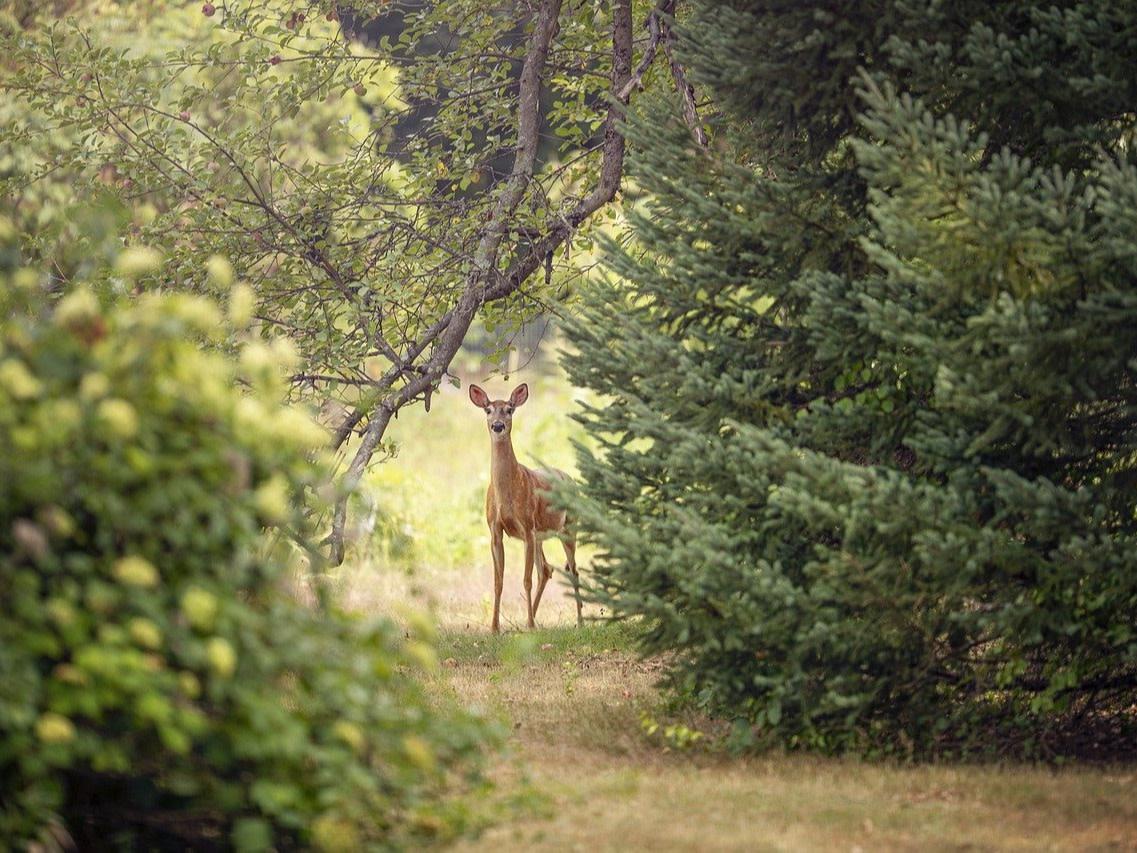 Hamburg Niendorfer Gehege Wald Rehe, Quelle:pixabay