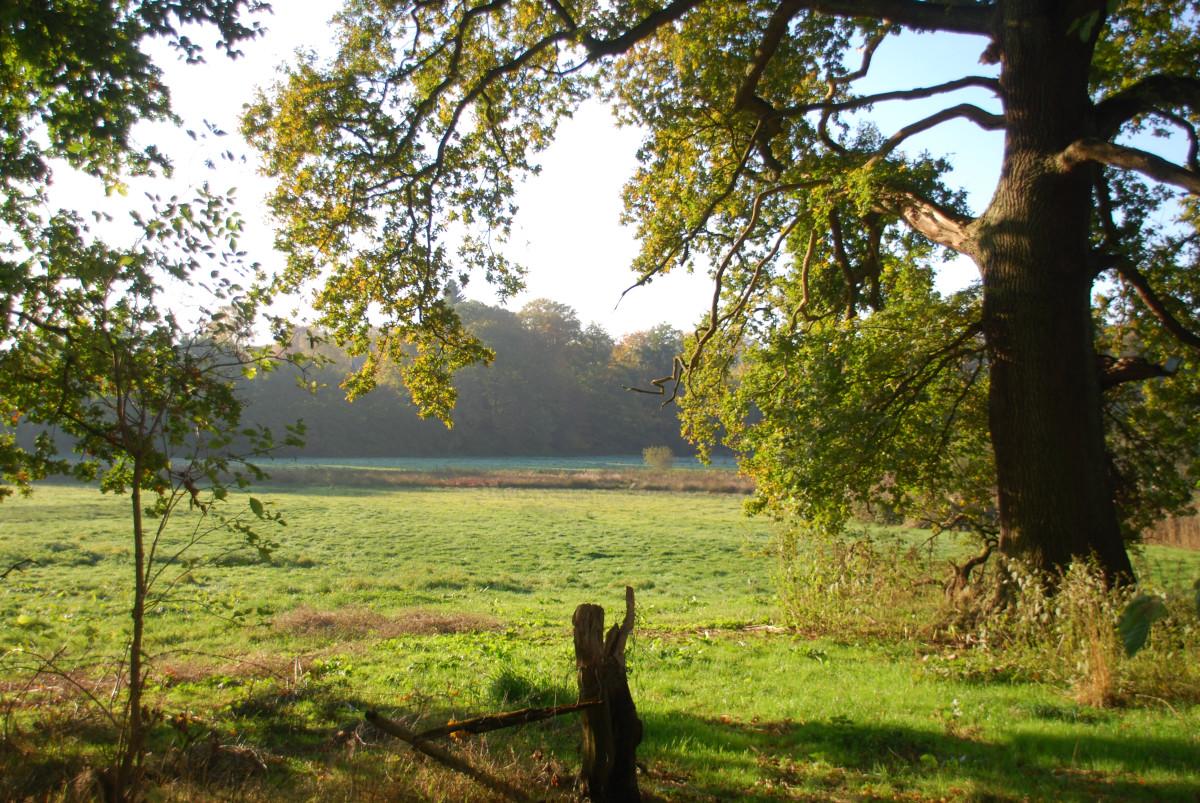 Hamburg Volksdorf Teichwiesen Park