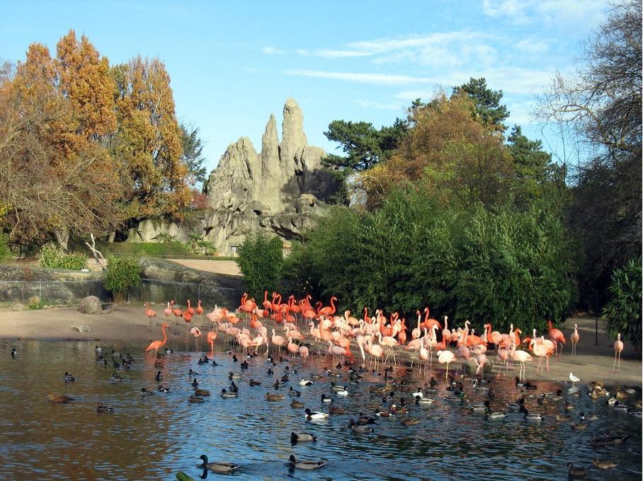 Hamburg Stellingen Tierpark Flamingos