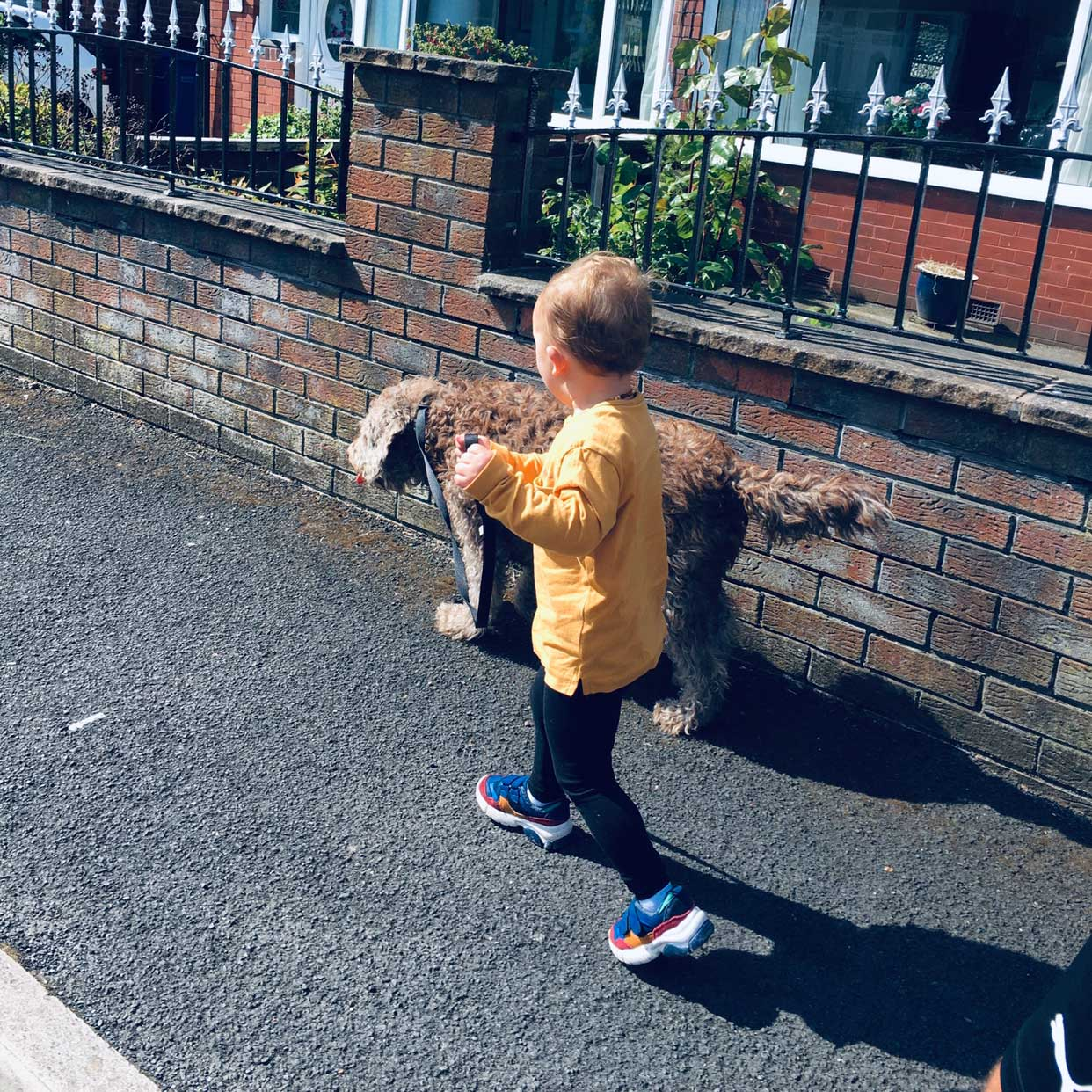 young boy walking a small dog on a lead