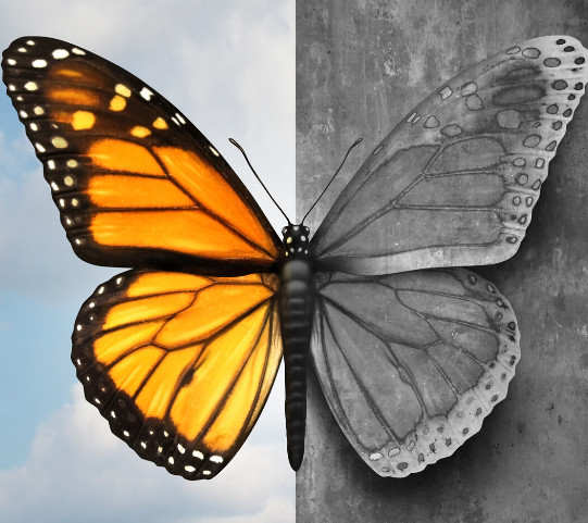 Mental health butterfly homepage