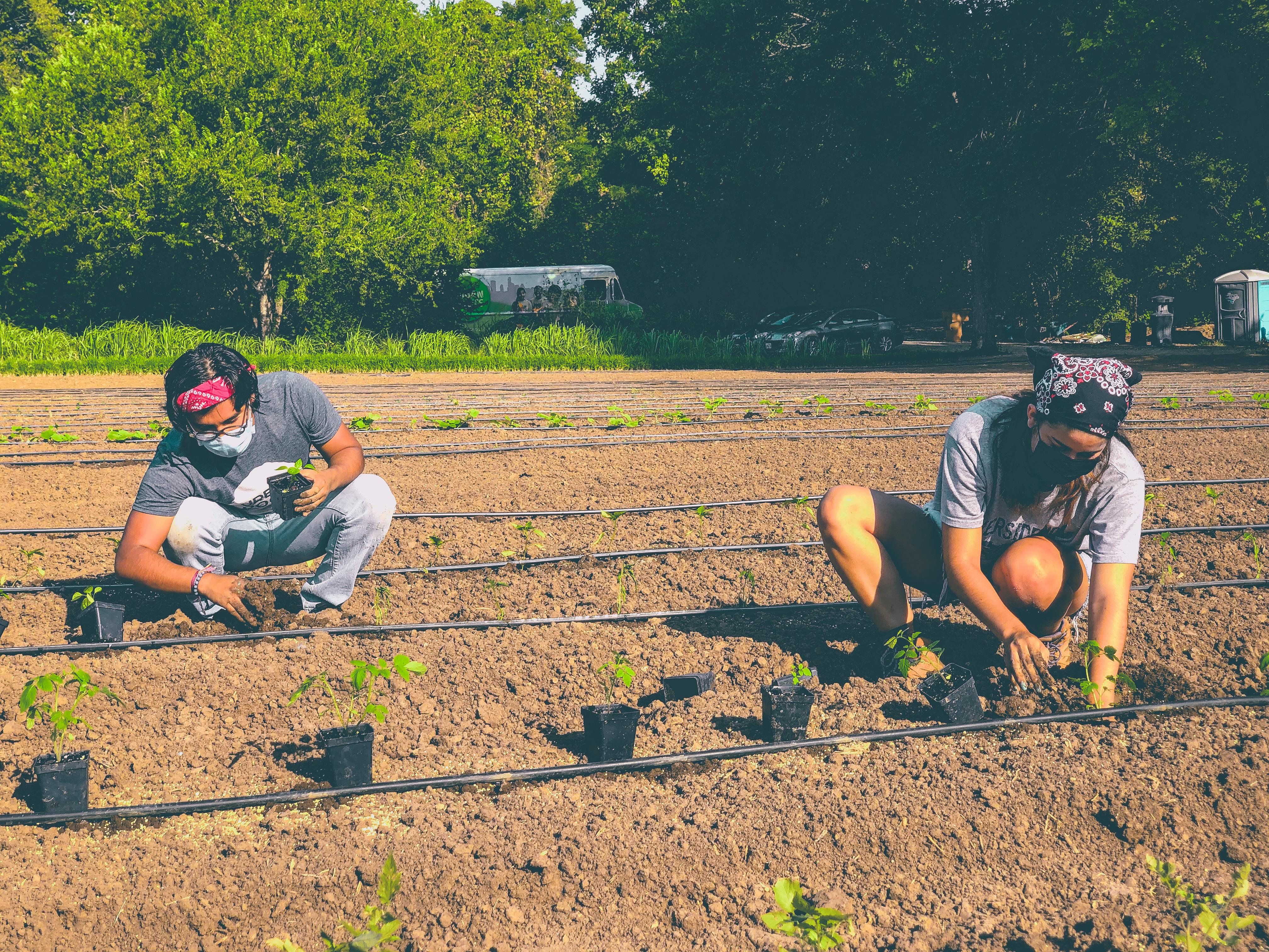 urban farm pic 2