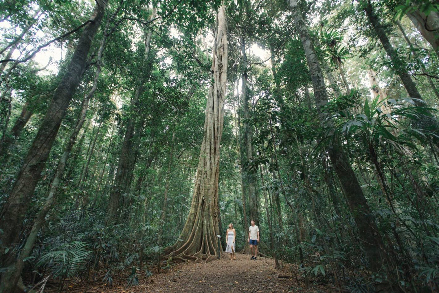Sunshine Coast Hinterland National Parks and Guided Tours