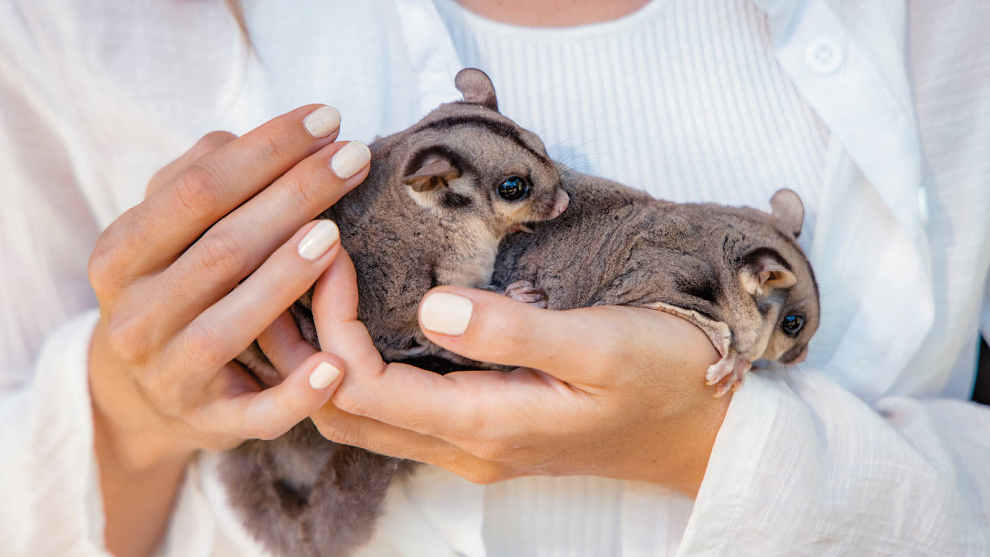 6 places you can cuddle baby animals on the Sunshine Coast