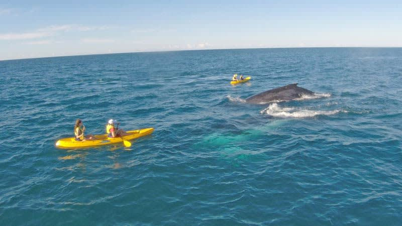 Kayak with Epic Ocean Adventures and you may have a close encounter of the humpback kind.