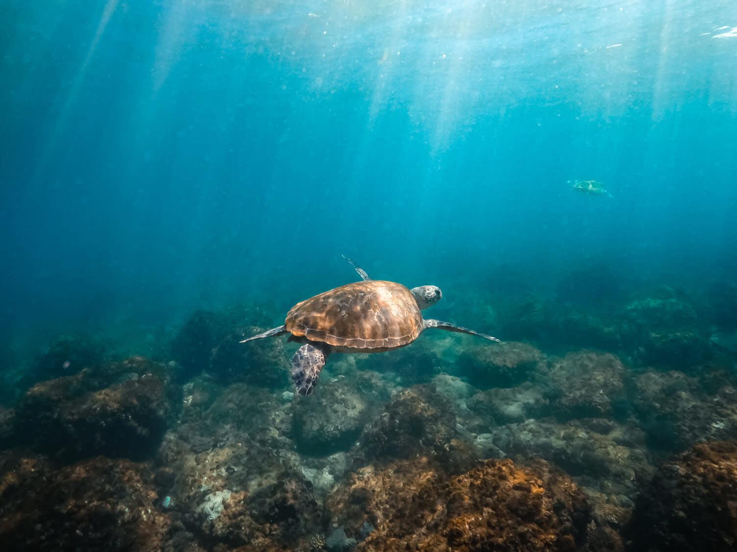 Snorkelling at Old Woman/ Mudjimba Island with Sunreef