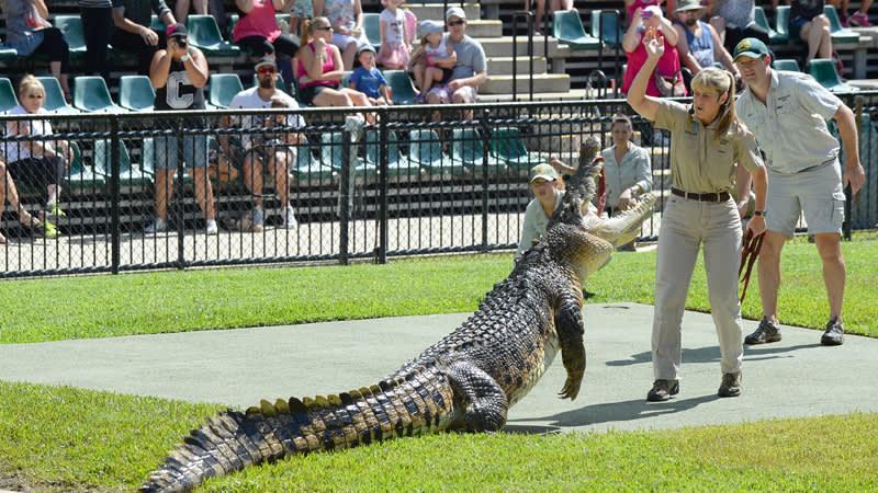 Don't miss Australia Zoo's crocodile presentation in the Crocoseum at 12 noon.