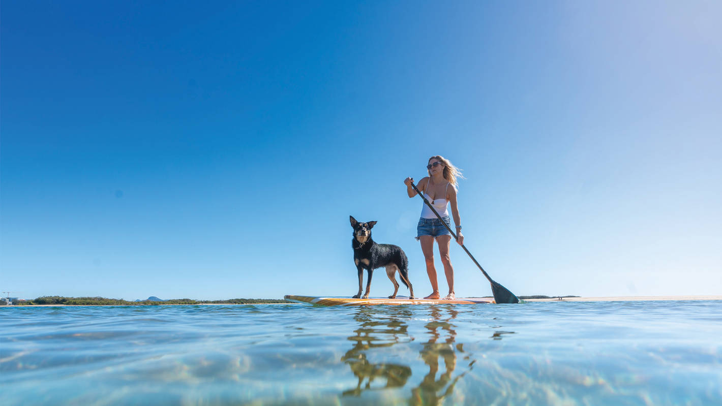 Pet-friendly adventures on the Sunshine Coast