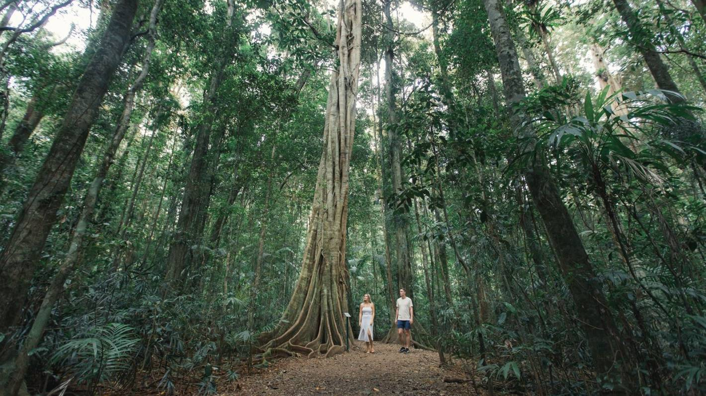 Eight reasons to visit Nambour and the Sunshine Coast Hinterland this autumn