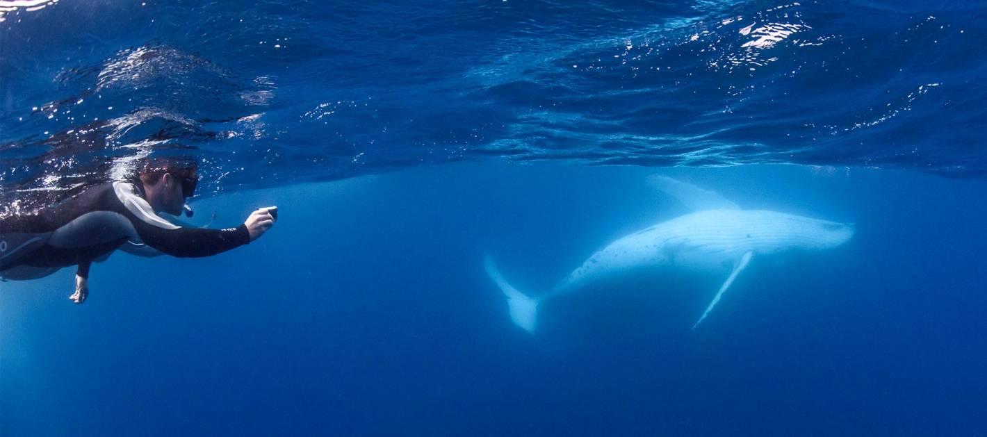 Whale watching season is back!