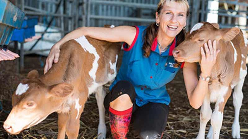 Calf cuddles at Maleny Dairies.