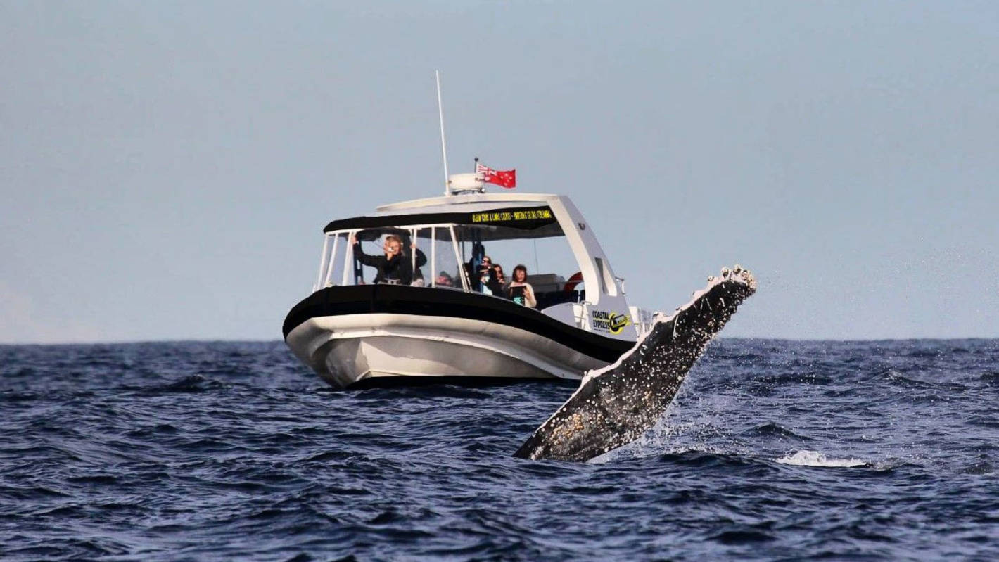 New Cultural Whale Watching experience shares songs and ancient stories