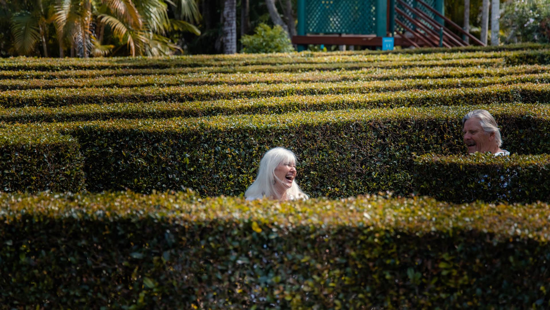 Above image: Bellingham Maze