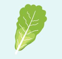 Romaine lettuce icon