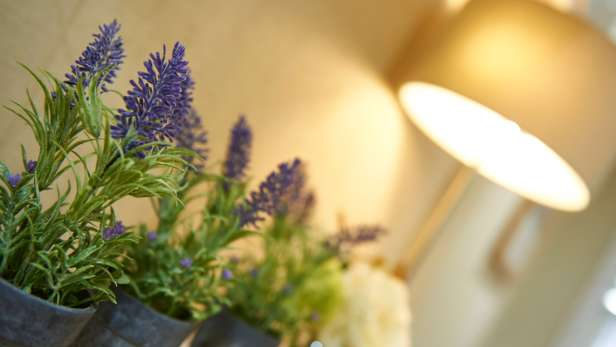 Lavender potted plants in a funeral home.