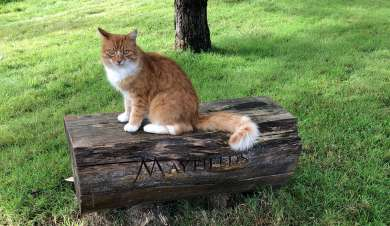 Tabby cat sat on a bench.