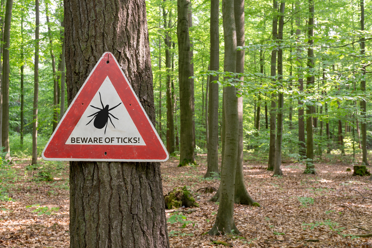 How to check for Lyme disease