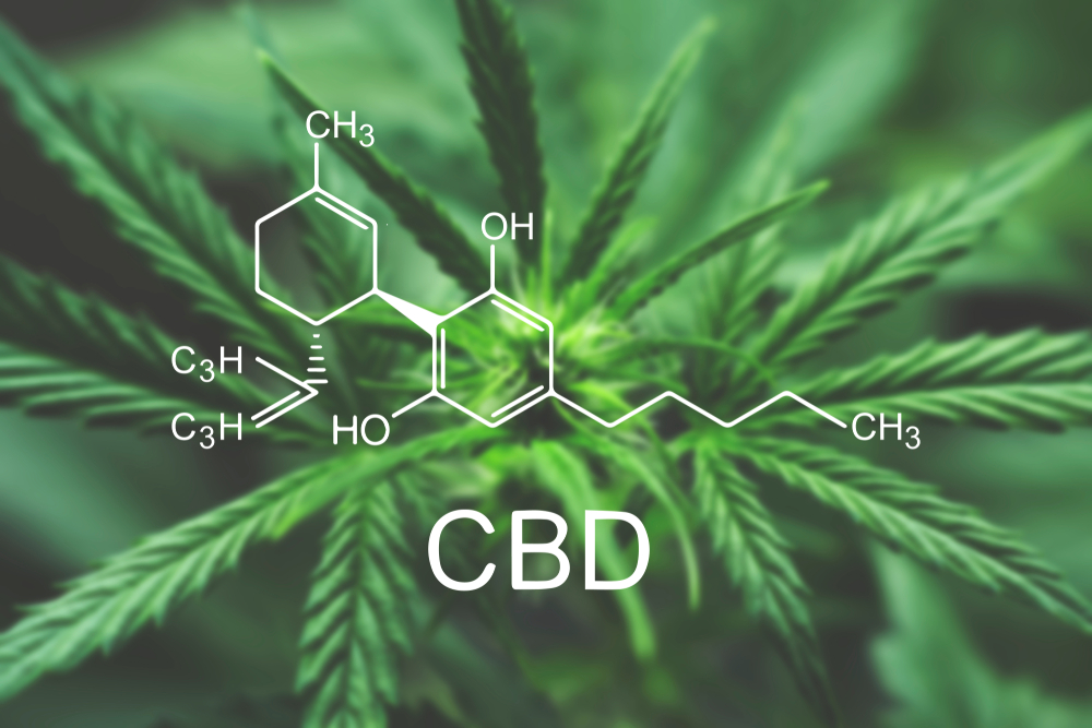 CBD oil - the facts