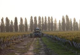 Six of the best Bordeaux Left Bank Wines
