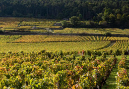 Burgundy 2019: our favourites