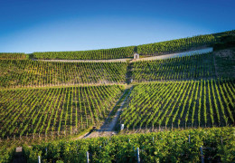 Chablis 2019: a first look at the vintage