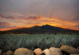 Authentic agave: Clase Azul