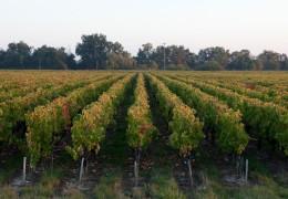Bordeaux Wine Tour Report March 2012 (Day 1)
