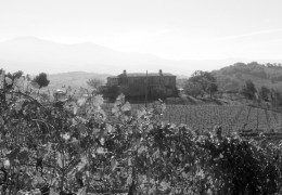 """""""A Wine That Makes You Smile"""": A Gem Discovered on our Trip to Montalcino"""