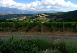 F+R Tuscany Report: Montalcino