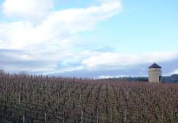 Burgundy 2014 - Vintage Report