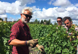 Bordeaux Safari: The Story Behind The Vines