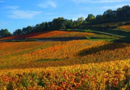 Burgundy 2016 En Primeur: Super Bon Millésime