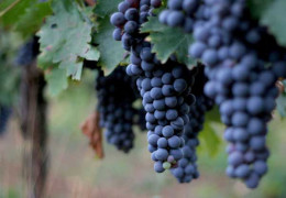 Brunello di Montalcino – The Young Minds of Montalcino