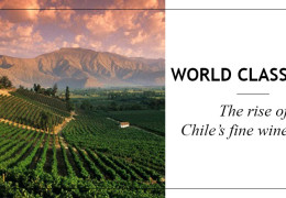 The Rise of Chile's Fine Wine Icons
