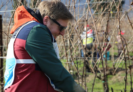 Festival del Potatore: Italy's First Vine Pruning Festival
