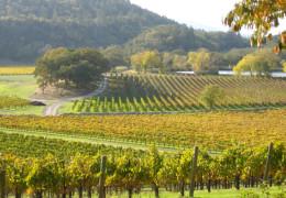 Napa Valley 2016 & 2017 Vintage Insights