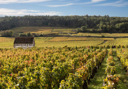 Burgundy 2019: the reds