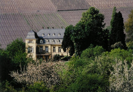 Egon Muller Interview - The Travails of Riesling Royalty