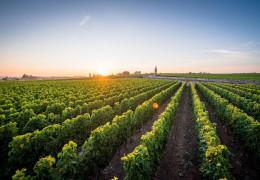 Bordeaux 2020: vintage overview