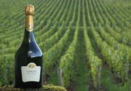 Wines Not to Miss in March 2020