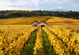 Wines to watch: October