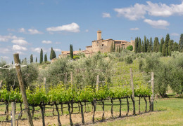 Brunello 2016: a magical year in Montalcino