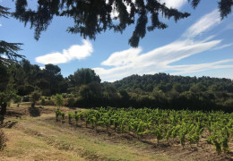 Feel the Energy! – F+R visits the secluded vineyards of Hegarty Chamans