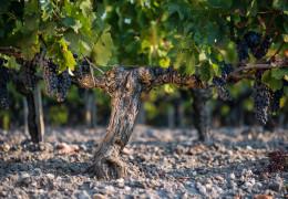 Bordeaux 2020: a tale of two halves
